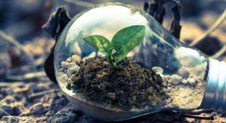 Ontwikkelassessment Bulb